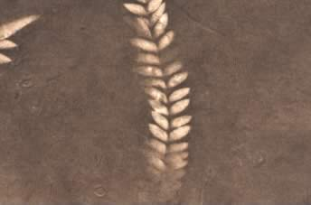 Lokta Sun Washed Fern Paper Light Taupe & Ash Brown