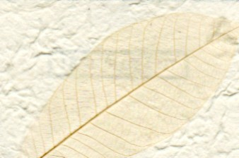 Garden Paper Rubber Leaf Natural